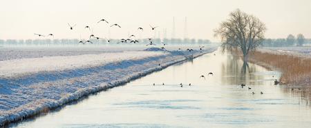 Foto de Birds flying over a snowy canal in winter - Imagen libre de derechos
