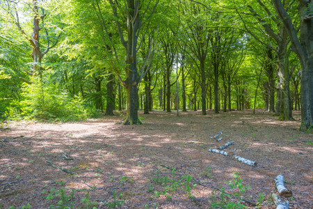 Photo for Clearing in a forest in sunlight in spring - Royalty Free Image