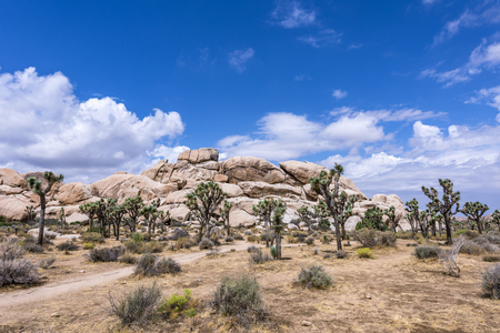 Photo for Large Joshua Trees frame the rugged rock formations surrounding the desert landscape. - Royalty Free Image