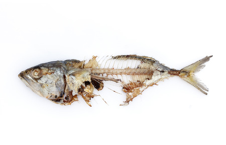 Foto de mackerel fish bone isolated white background - Imagen libre de derechos