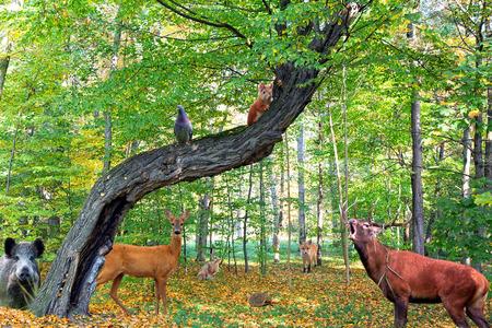 Foto de Forest full of animals - Imagen libre de derechos