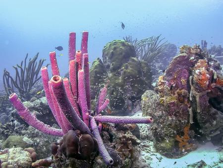 Photo pour Coral reef in Carbiiean Sea - image libre de droit