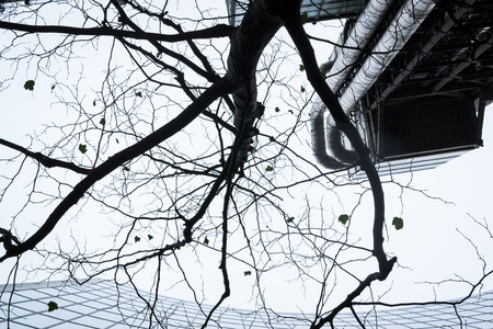 Modern Office Center in abstract form with branches and leaves of a dying tree
