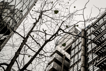 Modern Office Center in abstract form with branches and leaves of a dying tree in black and white B&W