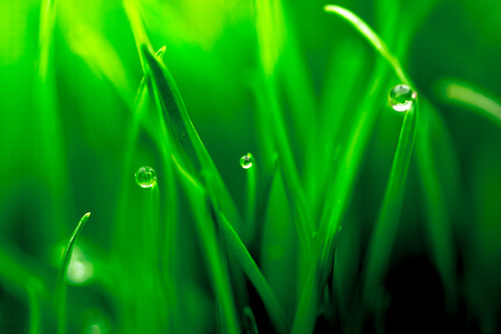 Photo for Macro closeup of fresh green with dew droplets of water - Royalty Free Image