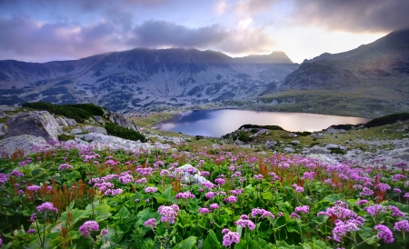 Photo for Retezat National Park with lake on mountain and flowers, Romania   - Royalty Free Image