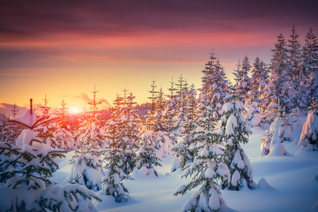 Foto de Colorful landscape at the winter sunrise in the mountain forest - Imagen libre de derechos