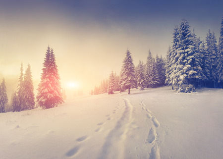 Photo pour Foggy winter sunrise in the mountains. - image libre de droit