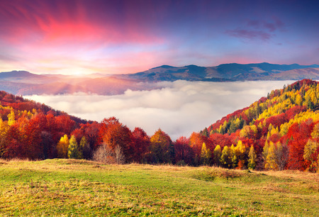 Photo pour Colorful autumn morning in the Carpathian mountains. Sokilsky ridge, Ukraine, Europe. - image libre de droit