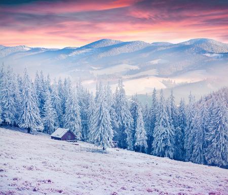 Foto de Colorful winter sunrise in the Carpathian mountains. Kostricha ridge, Ukraine, Europe. - Imagen libre de derechos