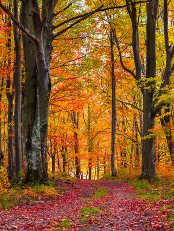 Foto de Colorful autumn morning in the mountain forest. - Imagen libre de derechos