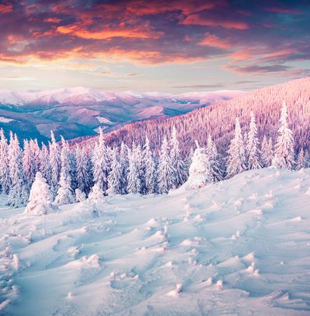 Foto de Colorful winter sunrise in the Carpathian mountains. Gorgany ridge, Ukraine, Europe. Instagram toning. - Imagen libre de derechos
