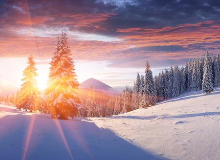 Photo pour Colorful winter sunrise in the mountains. - image libre de droit
