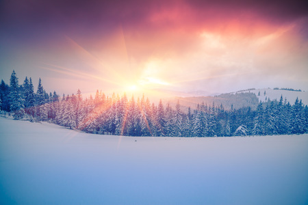 Photo for Colorful winter scene in the Carpathian mountains. - Royalty Free Image