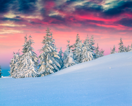 Photo for Colorful winter scene in the snowy mountains. - Royalty Free Image