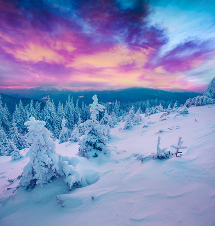 Photo pour Incredible winter sunrise in Carpathian mountains with snow covered fir trees. Colorful outdoor scene, Happy New Year celebration concept. Artistic style post processed photo.  - image libre de droit