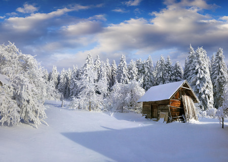 Foto für Sunny winter morning in Carpathian village with snow covered trees in garden. Colorful outdoor scene, Happy New Year celebration concept. Artistic style post processed photo. - Lizenzfreies Bild