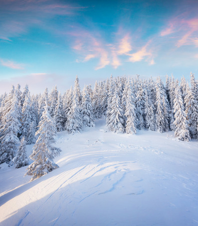 Photo pour Beautiful winter sunrise in Carpathian mountains. Colorful outdoor scene, Happy New Year celebration concept. Artistic style post processed photo. - image libre de droit