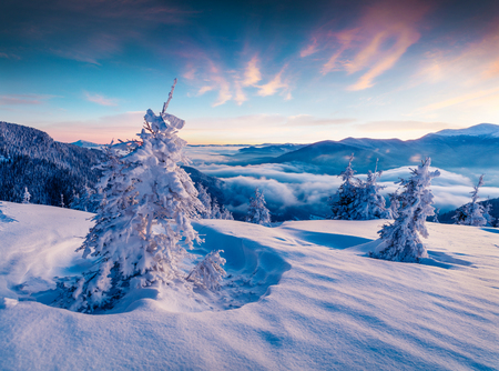Photo for Dramatic winter sunrise in Carpathian mountains with snow covered fir trees. Colorful outdoor scene, Happy New Year celebration concept. Artistic style post processed photo. - Royalty Free Image