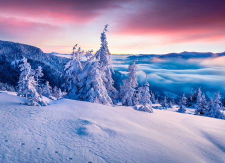 Foto de Splendid winter sunrise in Carpathian mountains with snow covered fir trees. Colorful outdoor scene, Happy New Year celebration concept. Artistic style post processed photo. - Imagen libre de derechos