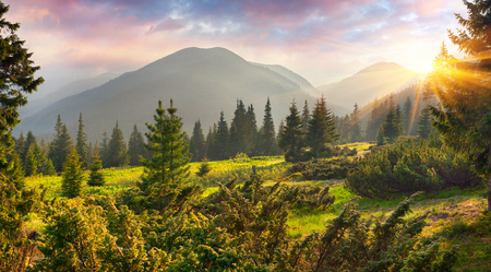Photo pour Fabulous spring sunrise in the Carpathian mountains. Colorful morning scene in a mountain meadow. Artistic style post processed photo. Beauty of nature concept background.  - image libre de droit