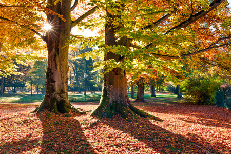 Photo for Bright morning view of old beech trees in  Kurpark in Thumersbach village, located on the shore of the Zell lake. Picturesque autumn scene in the city park. Beauty of nature concept background. - Royalty Free Image