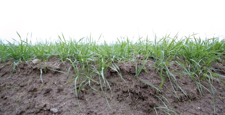Photo for Fertile soil profil with grass. - Royalty Free Image