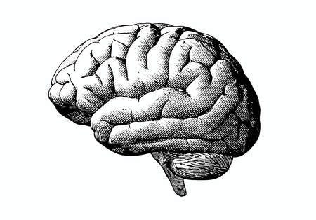 Illustration pour Engraving brain illustration in grayscale monochrome color on white background - image libre de droit