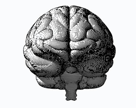 Illustration pour Monochrome engraving brain illustration in front view on white background - image libre de droit