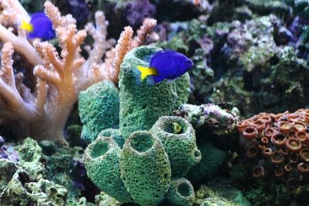 natural sea plants as nice aquarium background