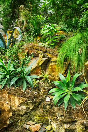 Photo for green natural jungle as very nice plant background - Royalty Free Image