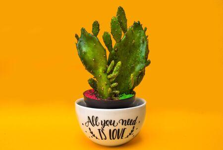 Foto de Small cactus in an - Imagen libre de derechos