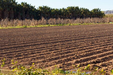 Photo for Fields worked in the agricultural park of Baix Llobregat and freshly sown for the summer harvest. Field that begins to germinate plants - Royalty Free Image