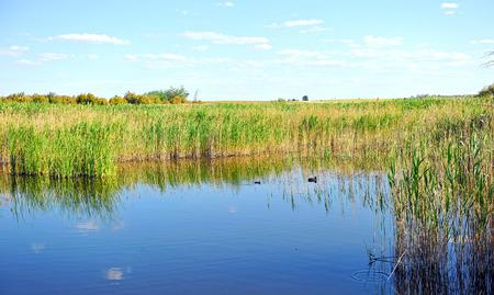 Photo for Wetland, Tablas de Daimiel National Park, Ciudad Real, Castilla la Mancha, Spain - Royalty Free Image