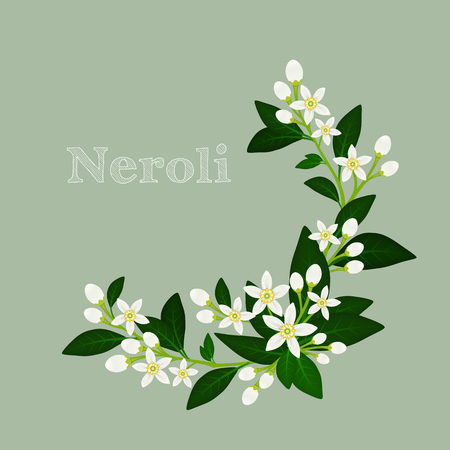 Illustration pour illustration with orange blossom: flowers, buds and leaves. - image libre de droit