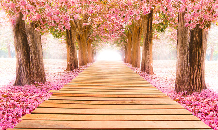 Photo for Falling petal over the romantic tunnel of pink flower trees / Romantic Blossom tree over nature background in Spring season / flowers Background - Royalty Free Image