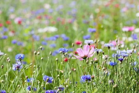 Photo pour flower meadow - image libre de droit