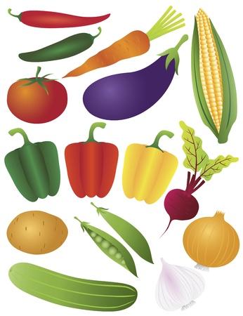 Vegetables Tomato Bell Peppers Chili Carrot Eggplant Potato Peapod Peas Onion Garlic Beet Corn Illustration
