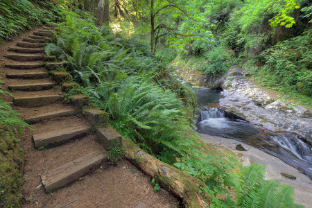 Foto de Wood Stair Steps in Sweet Creek Falls Trail Complex with Lush Greenery in Mapleton Oregon during Spring Season - Imagen libre de derechos