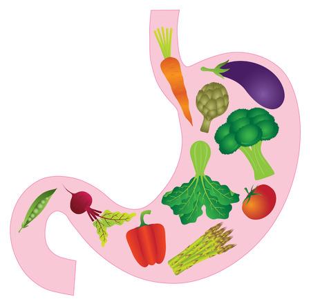 Ilustración de Human Stomach Anatomy with Carrot Eggplant Beet Bell Peppers Asparagus Artichoke Peas Tomato Green Vegetables Color Illustration - Imagen libre de derechos