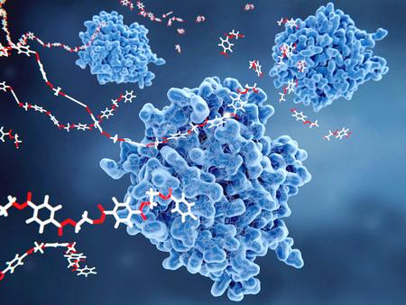 Foto de PETase is a bacterial enzyme that breaks down PET-plastic to monomeric molecules. The whole bacterial degradation process yields terephtalic acid and ethylene glycol, which are environmentally harmless. - Imagen libre de derechos