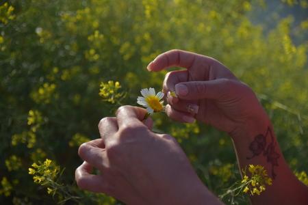 Foto de flower - Imagen libre de derechos
