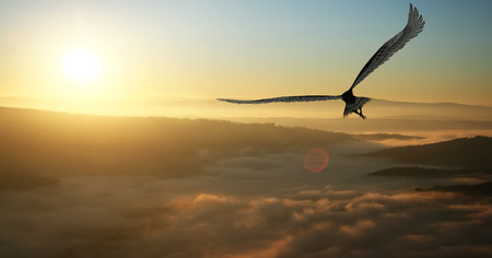 Photo pour Eagle flying in the clouds at dawn - image libre de droit