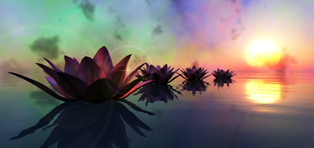 Photo pour water lily floating in the water and sunset - image libre de droit
