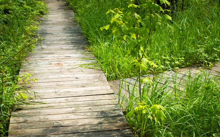 Photo for Two wooden paths lead to different directions. - Royalty Free Image