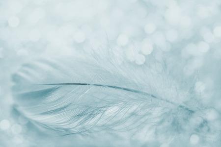 Foto de Tender feather on light background for your design, blue color, copy space for text - Imagen libre de derechos