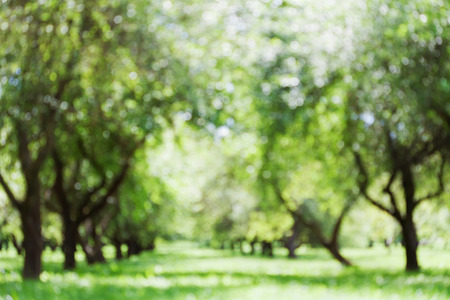 Photo for Defocused park or garden for bokeh background, blurred alley of trees, morning light, parkland, green color - Royalty Free Image