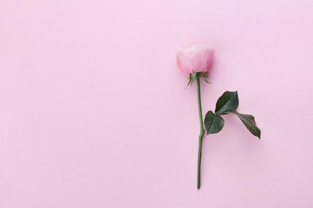Foto de Pink rose flower on pastel background top view. Flat lay style. - Imagen libre de derechos