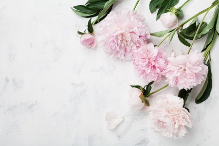 Foto de Beautiful pink peony flowers on white table with copy space for your text top view and flat lay style. - Imagen libre de derechos