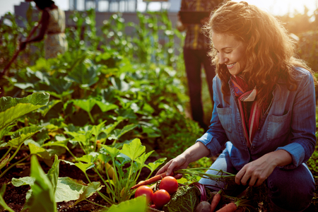 Foto de Friendly team harvesting fresh vegetables from the rooftop greenhouse garden and planning harvest season on a digital tablet - Imagen libre de derechos
